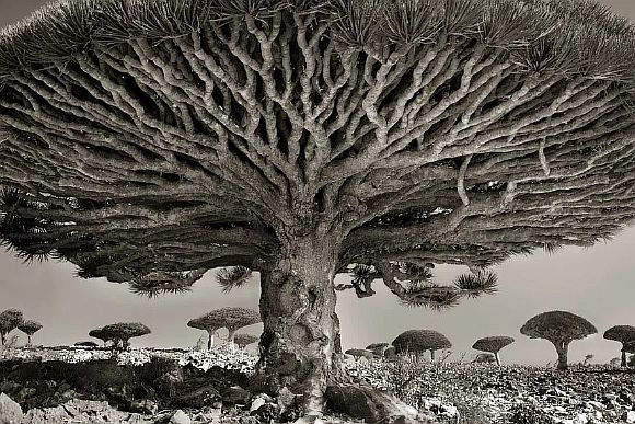AncientTrees01
