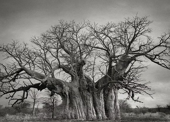 AncientTrees04