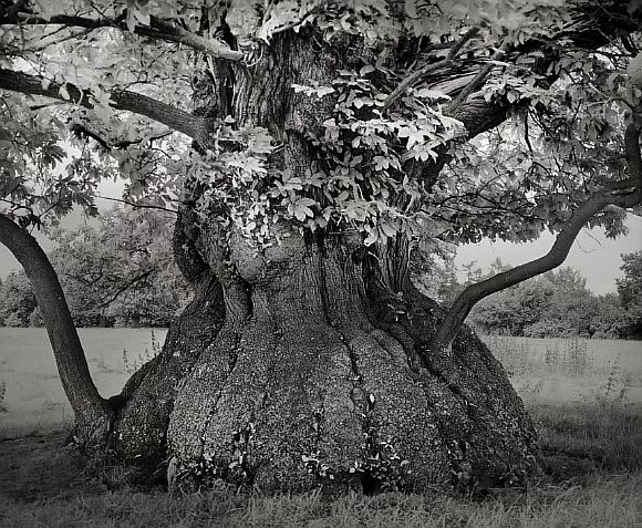 AncientTrees05