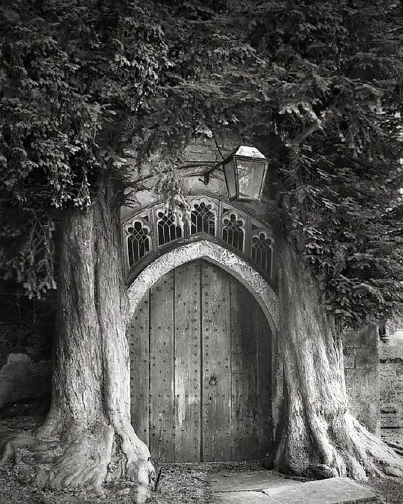 AncientTrees07