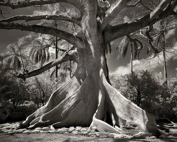 AncientTrees10