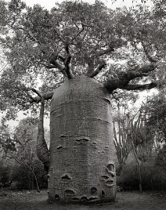AncientTrees11