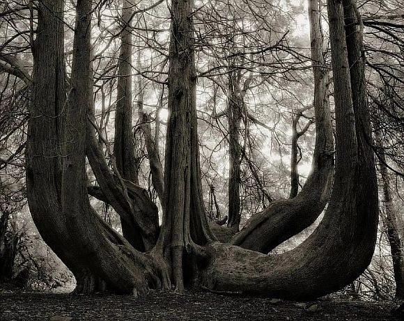 AncientTrees14