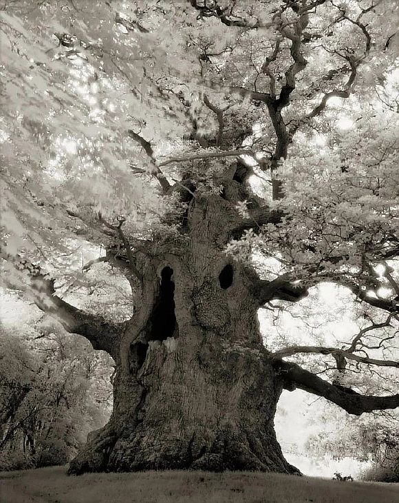 AncientTrees16