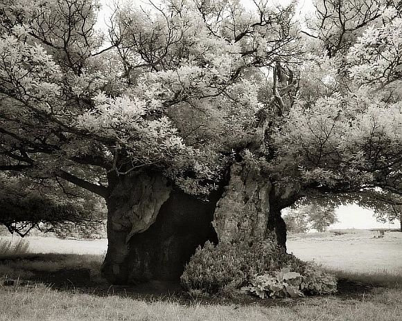 AncientTrees19