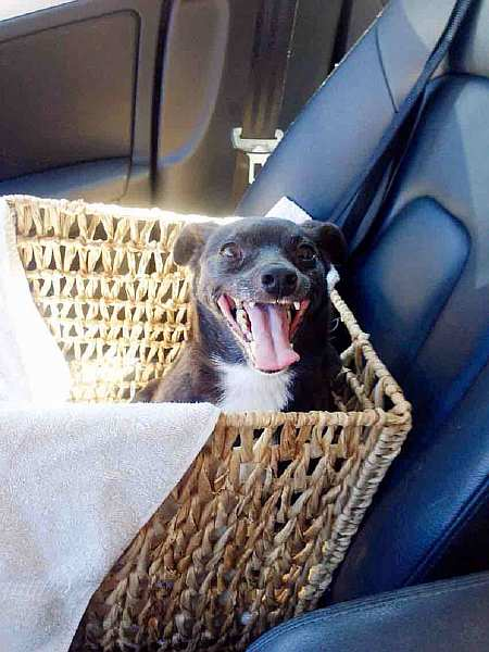 oldest-adopted-dogs-57aad8aaee76a__605