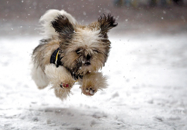 13561460-R3L8T8D-650-131214cute-puppy-playing-in-snow-wallpaper