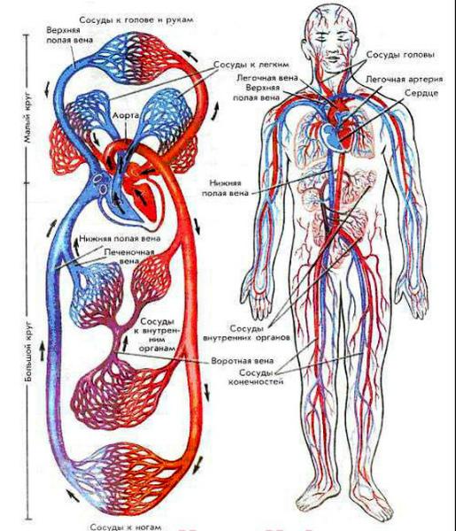 мы ничего не знаем о лимфатической системе