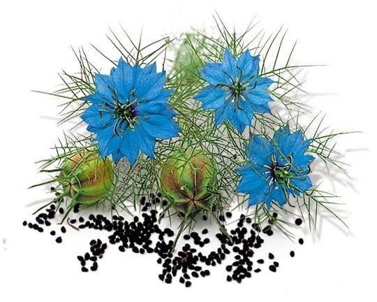 Царь всех растений — враг всех болезней!