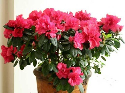 Комнатные цветы в горшочках