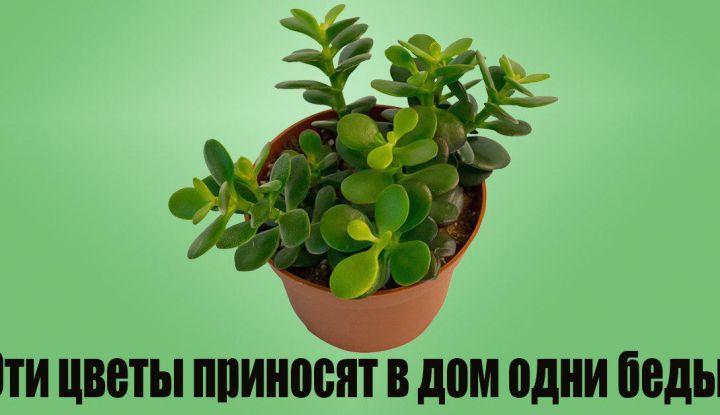 Какие растения вытягивают из вас силы